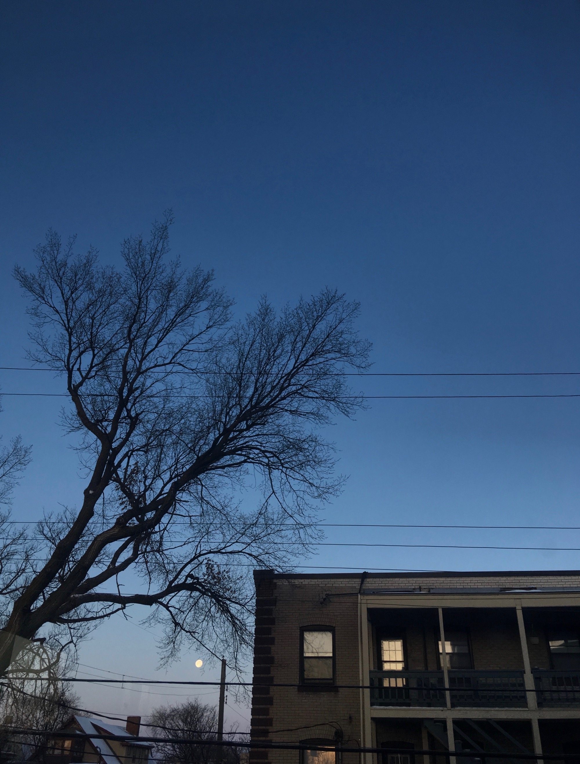 full moon between bare trees and sleeping apartment building