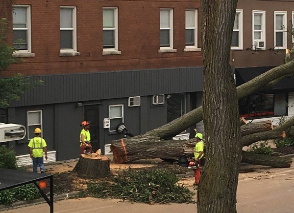 work crew with chainsaws and yellow utility vests walking around a downed tree which, as it fell, sheared off a streetlight and nearly rolled into a nearby apartment building