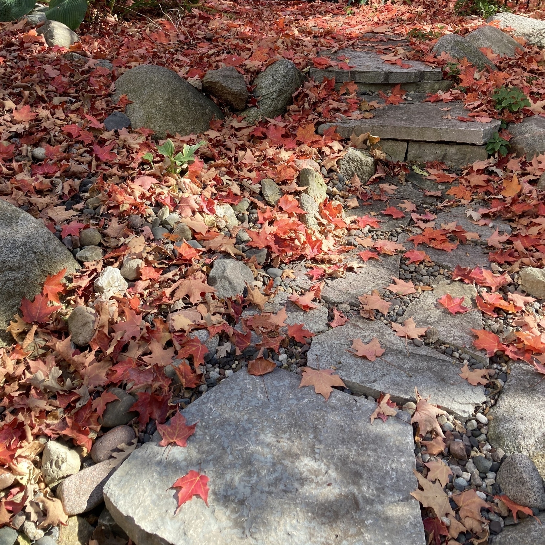 Leaves scattered on stone steps